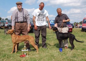Best two Lurcher Pups 2015